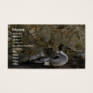 Northern pintail male business card