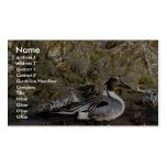 Northern pintail male business card template