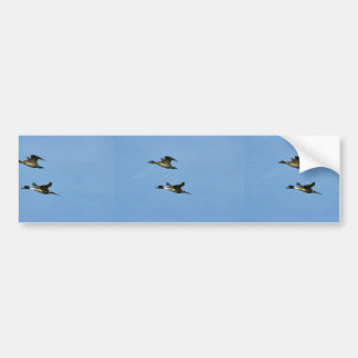 Northern Pintail Pair Bumper Sticker