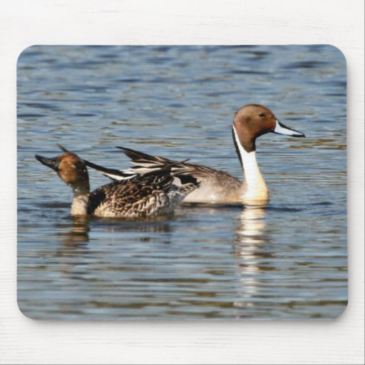 Northern Pintail Pair Mouse Pads