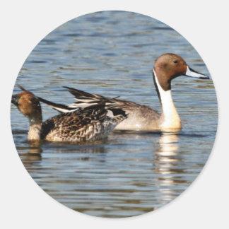 Northern Pintail Pair Sticker