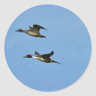 Northern Pintail Pair Round Stickers