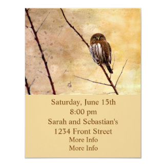 Northern Pygmy Owl 4.25x5.5 Paper Invitation Card