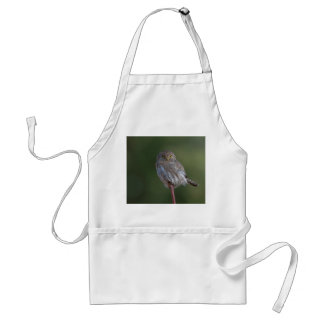 Northern Pygmy-owl Adult Apron