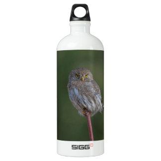 Northern Pygmy-owl Aluminum Water Bottle