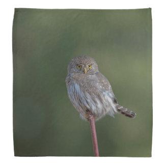 Northern Pygmy-owl Bandana