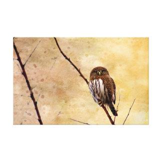 Northern Pygmy Owl Canvas Print