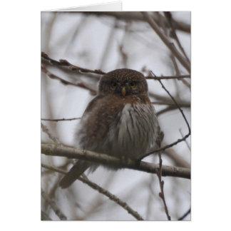 Northern Pygmy Owl Card