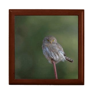 Northern Pygmy-owl Gift Box
