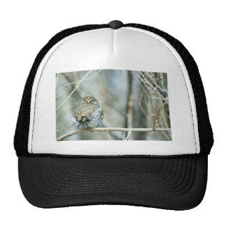 Northern pygmy-owl trucker hat