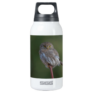 Northern Pygmy-owl Insulated Water Bottle
