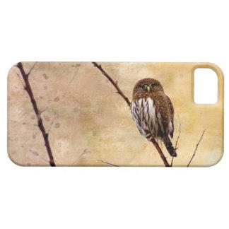 Northern Pygmy Owl iPhone SE/5/5s Case