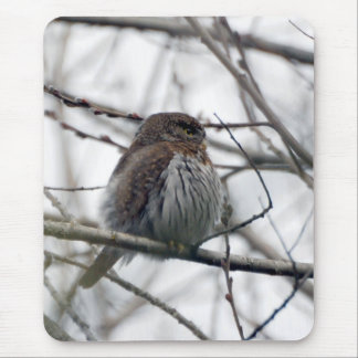Northern Pygmy Owl Mouse Pad