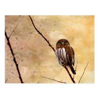 Northern Pygmy Owl Postcard