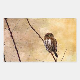 Northern Pygmy Owl Rectangular Sticker