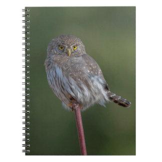 Northern Pygmy-owl Spiral Notebook