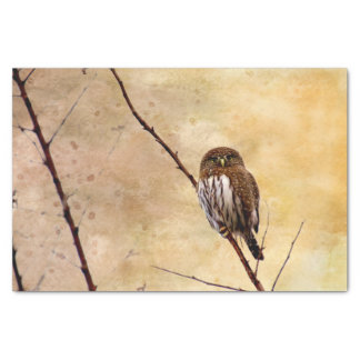 Northern Pygmy Owl Tissue Paper