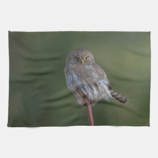 Northern Pygmy-owl Towels