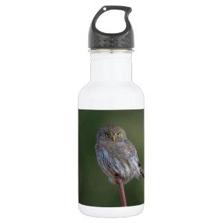 Northern Pygmy-owl Water Bottle