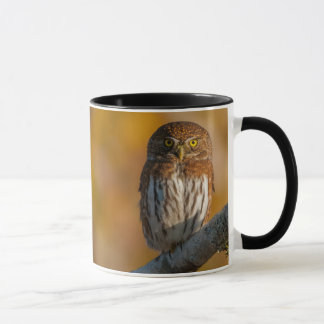 Northern Pygmy Owl with Fall colours Mug