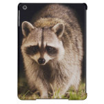 Northern Raccoon, Procyon lotor, adult at Case For iPad Air