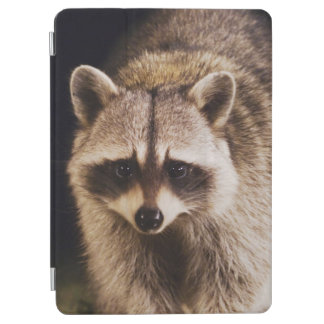 Northern Raccoon Procyon lotor adult at iPad Air Cover