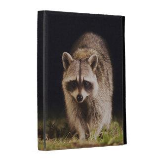 Northern Raccoon, Procyon lotor, adult at iPad Case