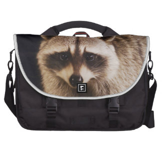 Northern Raccoon, Procyon lotor, adult at Laptop Commuter Bag