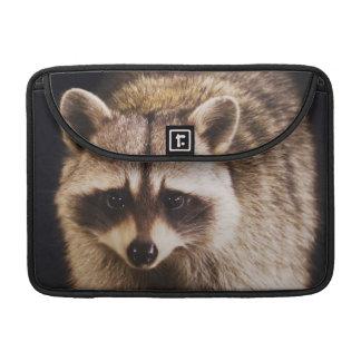 Northern Raccoon, Procyon lotor, adult at MacBook Pro Sleeves