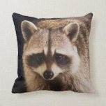 Northern Raccoon, Procyon lotor, adult at Throw Pillow