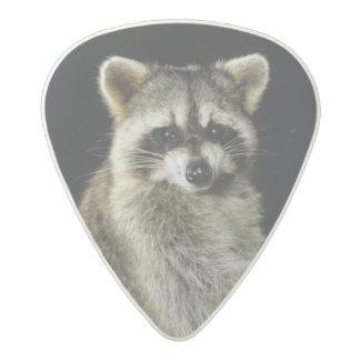Northern Raccoon, Procyon lotor, adult at tree Acetal Guitar Pick