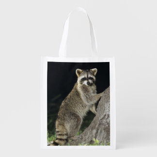 Northern Raccoon, Procyon lotor, adult at tree Grocery Bags