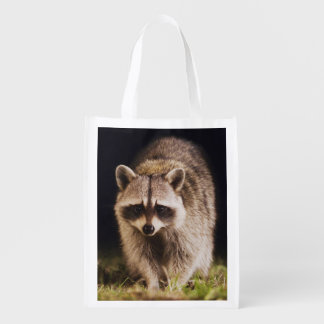 Northern Raccoon, Procyon lotor, adult at Grocery Bag
