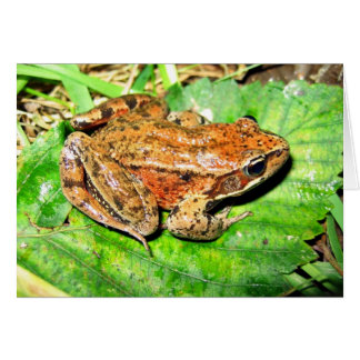 Northern Red legged frog Card