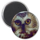 Northern Saw-whet owl 2 Inch Round Magnet