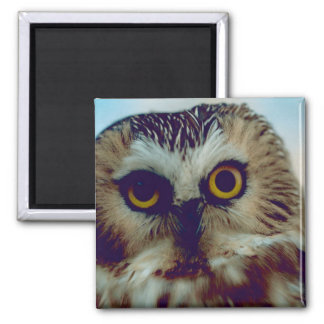 Northern Saw-whet owl 2 Inch Square Magnet