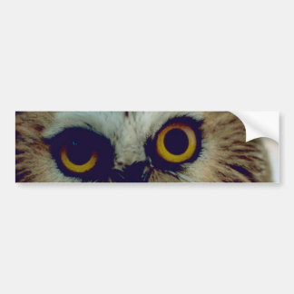 Northern Saw Whet Owl Bumper Sticker