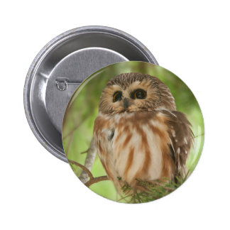 Northern Saw-whet Owl Pinback Button
