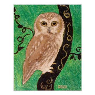 Northern Saw Whet Owl by artist Carol Zeock Poster