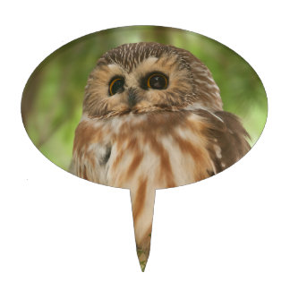 Northern Saw-whet Owl Cake Topper