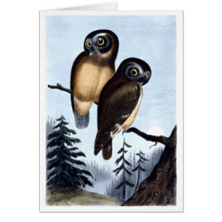 Northern Saw-whet Owl Card