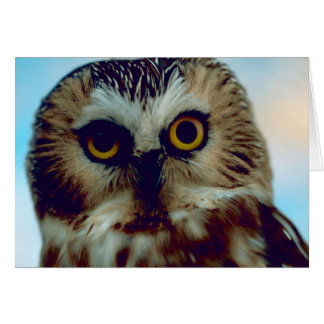 Northern Saw Whet Owl Card