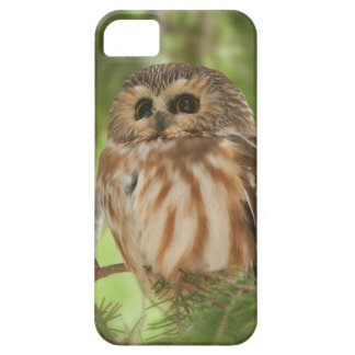 Northern Saw-whet Owl Case For The iPhone 5