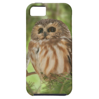 Northern Saw-whet Owl iPhone 5 Covers