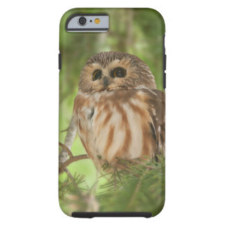 Northern Saw whet owl Tough iPhone 6 Case