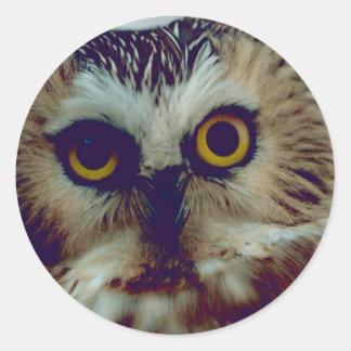 Northern Saw-whet owl Classic Round Sticker