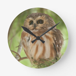 Northern Saw-whet Owl Clock