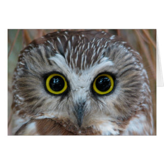 Northern Saw-whet Owl Close-Up Card