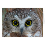 Northern Saw-whet Owl Close-Up Cards