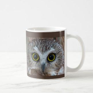 Northern Saw-whet Owl Close-Up Coffee Mug